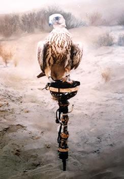 The Falcon - Qatar by Mai Griffin